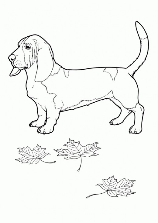 basset hound coloring book