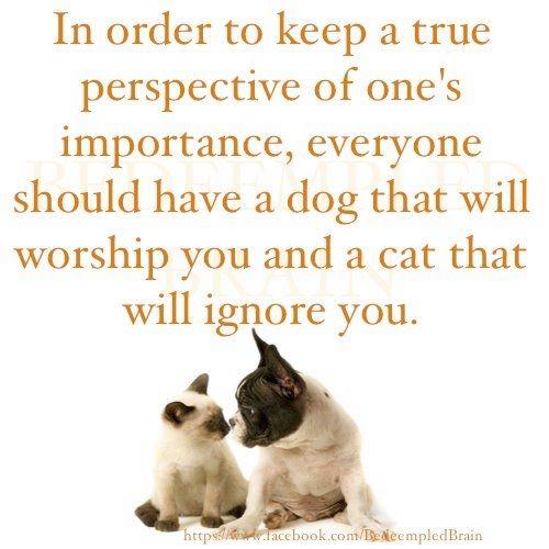 dog worship