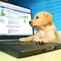 Best Dog Facebook Pages For Dog Owners