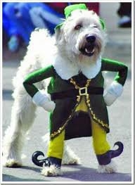 Irish Jig Dog