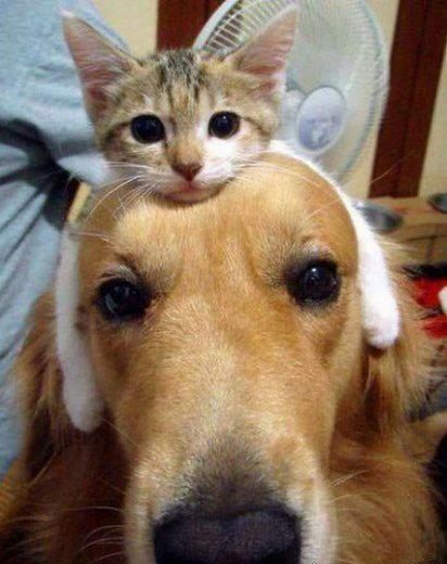 Dog and Cat Besties