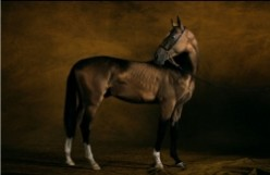Endangered Horse and Pony Breeds