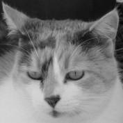 ashroc profile image