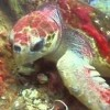 coralseavideo profile image