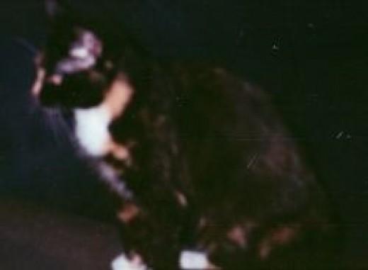 CAT, My Alien