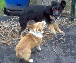 Dakota with my Grand-Puppy, Einstein