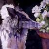 melmoon profile image
