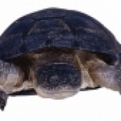 TurtleTitan profile image