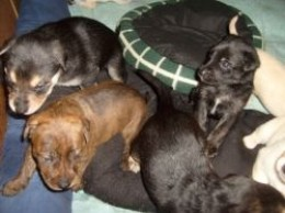 Three week-old pups.