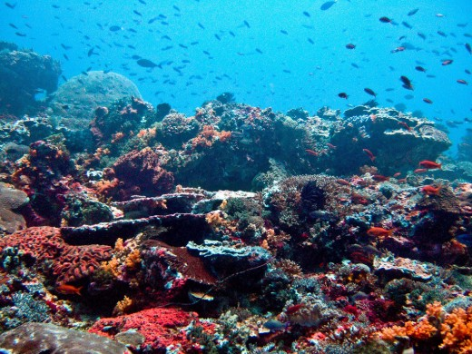 Colorful coral reef in the waters off Bali, Indonesia