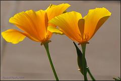 From Flickr.com