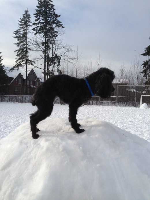 This is me on a giant snowball