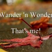 wander n wonder profile image