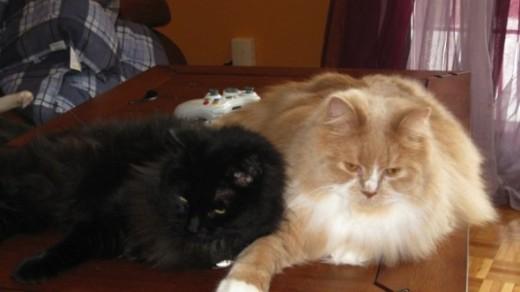 Oliver and Midnight, cuddling!