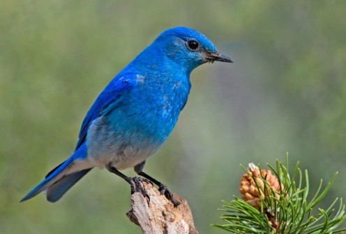 Instant happiness is a bluebird.