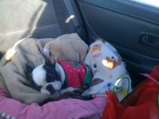 Noki - On His Way Home From His 1st Family Christmas