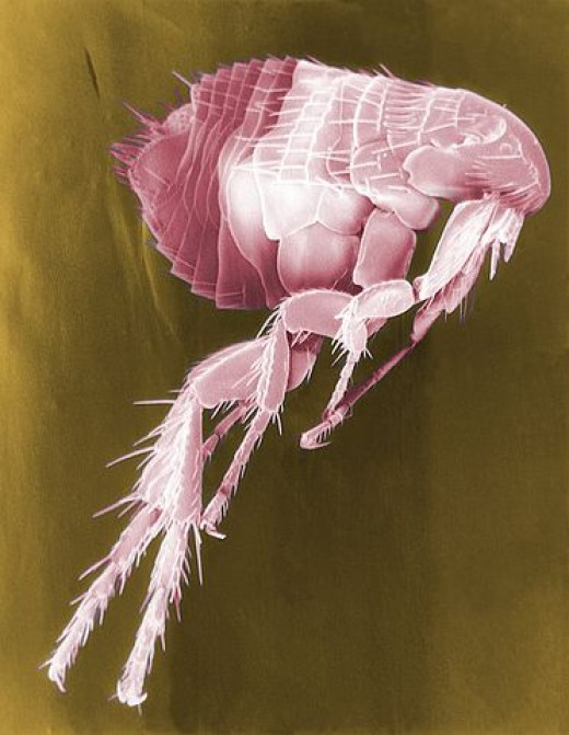 "A flea under an electron microscope. The pink color seems to be due either to lighting or some sort of process they were carrying out, as it's labeled ""false color."""