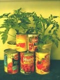 Processed Foods  You Should Have in Your Home Pantry or Cupboard