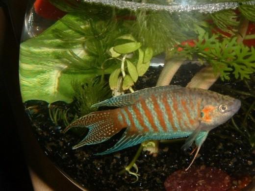 Tropical fish at walmart for Types of fish at walmart