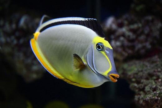 Nature Picture Selection Marine Fish