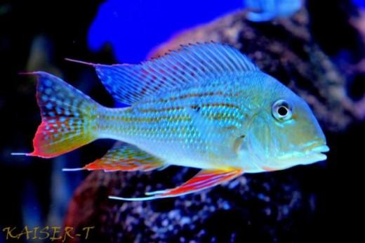 Bobs tropical fish augusta ga for Tropical fish species