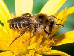 biodynamic-beekeeping