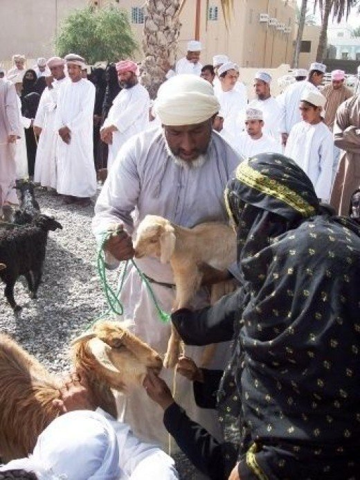 Omani Woman Inspecting Animals for Sale