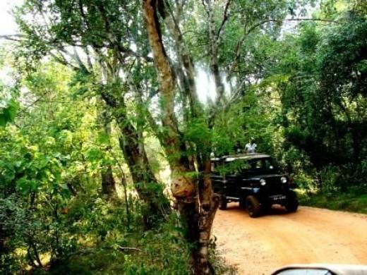 The Safari Jeep in Sigiriya