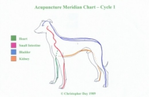 Acupuncture meridians in the dog (first cycle acc. C. Day)