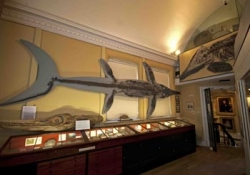 The Geology Gallery of the Philpot Museum (www.lymeregismuseum.co.uk)