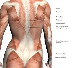 What's causing your back pain?