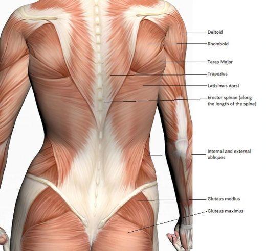 Core Muscles: Weak Core Muscles Lower Back Pain