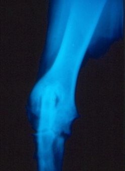 Arthritis in the Dog