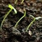 seedlingspublis profile image