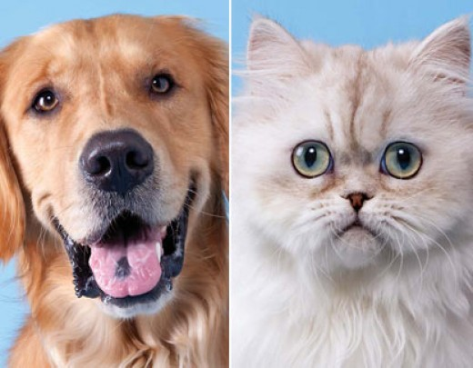 a discussion on whether cats or dogs are better pets Find out whether you are a dog person or cat while larger households tended to include dogs what your pet preference and others mesh better with a cat.