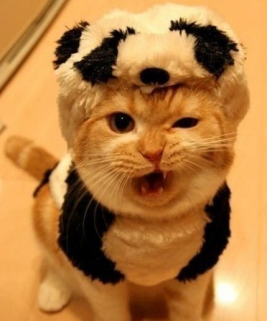 This kitten's is stealing the one-eyed growl! And is she wearing a puppy skin? Scary!