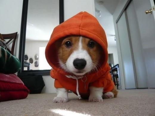 Yo dawg. Pupz n the hood!