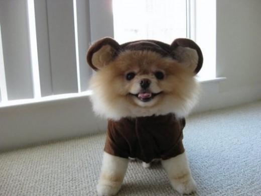 BOO! I'm a BEAR!