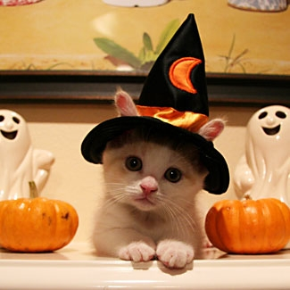 Witch-cat is attempting to cast a spell on you. Avoid eye contact if possible.