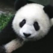 StefanoH profile image