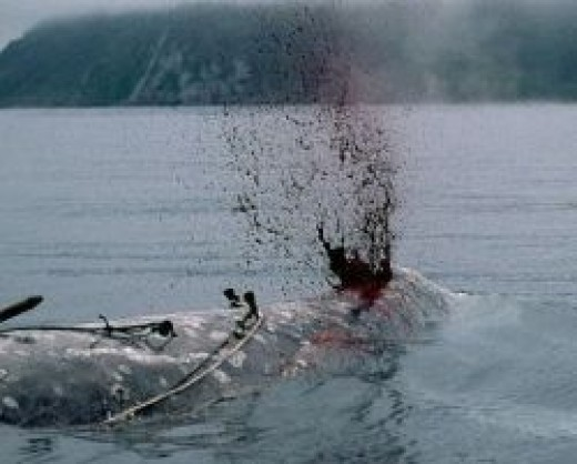 A Harpoon does not immediately put an end to the life of a Whale often take a long time and sometimes he's alive before he skinned the factory ship