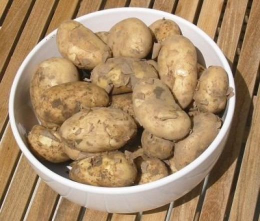 Jersey Royal Potato
