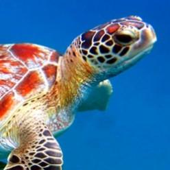 Sea Turtles Hatching Eggs