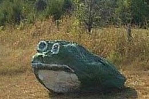 Have You Seen The Green Frog?