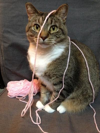 Kreative kitteh looks gud in penk.
