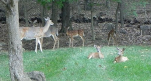 How I Saved My Garden With the Best Deer Deterrent Ever