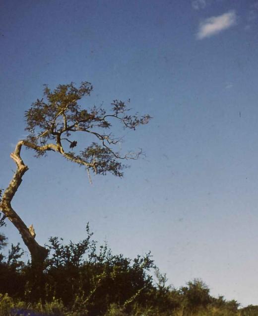 A tree on the roadside