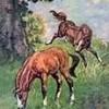 HorseAndPony LM profile image