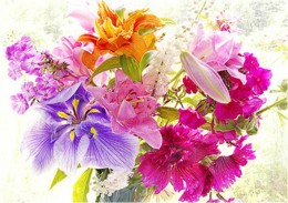Beautiful orchids of varied colors.