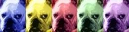 Doggie warhol style Pop Art